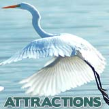 SW FL Attractions
