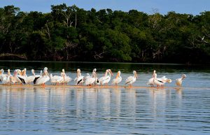 Florida Eco-Tours - Guided Boat Tours of the FL Everglades