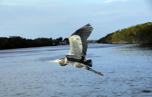 everglades national park vacations