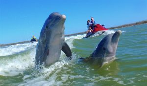 Water Sports Dolphin Jet Ski Tour by Avi's water sports Marco Island FL