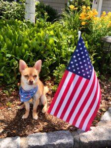 FL Pet Friendly Lodging Rentals Homes Hotels Motels Resorts