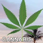 FL Cannabis Marijuana Laws Clinic Doctors